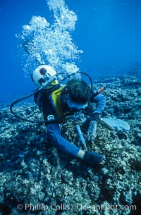 Paul W. Gabrielson, Ph.D., collecting algae and coral samples. Rose Atoll National Wildlife Sanctuary, American Samoa, USA, natural history stock photograph, photo id 00824