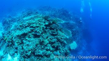 SCUBA diver over pristine South Pacific coral reef, Fiji, Wakaya Island, Lomaiviti Archipelago