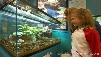 """Visitors view a display of amphibians at the """"Water"""" exhibit, San Diego Natural History Museum, Balboa Park"""