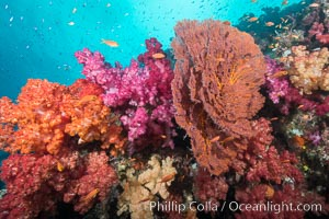Beautiful South Pacific coral reef, with gorgonian sea fans, schooling anthias fish and colorful dendronephthya soft corals, Fiji, Dendronephthya, Gorgonacea, Gau Island, Lomaiviti Archipelago