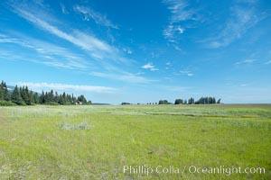 Sedge grass meadows, spruce trees, and blue sky, Lake Clark National Park, Alaska