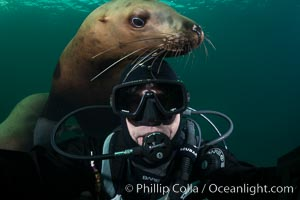 Selfie with Steller sea lion underwater, Norris Rocks, Hornby Island, British Columbia, Canada. Hornby Island, British Columbia, Canada, Eumetopias jubatus, natural history stock photograph, photo id 32682