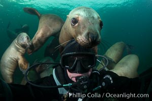 Selfie with Steller sea lion underwater, Norris Rocks, Hornby Island, British Columbia, Canada. Hornby Island, British Columbia, Canada, Eumetopias jubatus, natural history stock photograph, photo id 32684