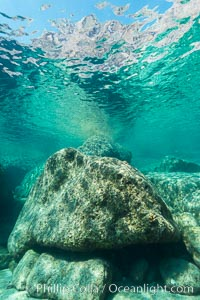 In the Shallows at Isla San Francisquito, Sea of Cortez