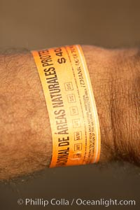 Permit wristband issued by Mexican environmental agencies to shark divers to support research, conservation and protection of Isla Guadalupe Special Biosphere Reserve, Guadalupe Island (Isla Guadalupe)