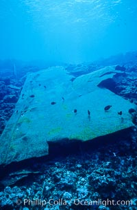 Hull plate,  wreck of F/V Jin Shiang Fa. Rose Atoll National Wildlife Sanctuary, American Samoa, USA, natural history stock photograph, photo id 00808