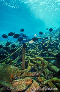 Debris,  wreck of F/V Jin Shiang Fa. Rose Atoll National Wildlife Sanctuary, American Samoa, USA, natural history stock photograph, photo id 00814