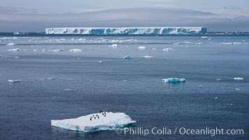 Small ice floe with penguins, with a large tabular iceberg in the distance, Antarctic Sound