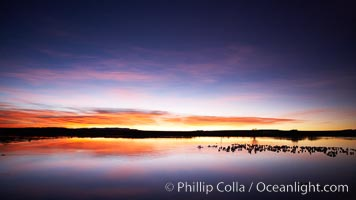 Sunrise over Bosque del Apache.  Rich predawn colors are reflected in the main impoundment pond in the refuge.  Snow geese are seen resting on the water, Chen caerulescens, Bosque del Apache National Wildlife Refuge, Socorro, New Mexico