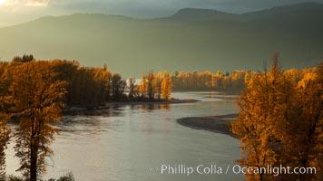 Fall colors along Little Shuswap Lake, near the Adams River, Oncorhynchus nerka, Roderick Haig-Brown Provincial Park, British Columbia, Canada