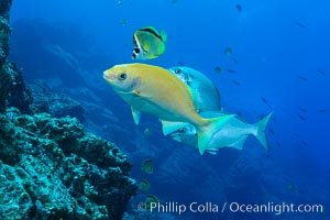 Socorro Island Underwater, Mexico, Socorro Island (Islas Revillagigedos)