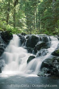 A small waterfall tumbles through old growth forest of douglas firs and hemlocks.  Sol Duc Springs, Olympic National Park, Washington