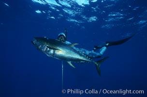 Spearfisherman holding yellowfin tuna, Guadalupe Island (Isla Guadalupe)