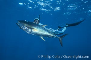 Joe Tobin and yellowfin tuna speared at Guadalupe Island, Guadalupe Island (Isla Guadalupe)