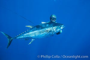 Chris Thompson and yellowfin tuna speared at Guadalupe Island, Guadalupe Island (Isla Guadalupe)
