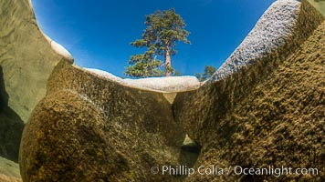 Split view of Trees and Underwater Boulders, Lake Tahoe, Nevada. Lake Tahoe, Nevada, USA, natural history stock photograph, photo id 32331