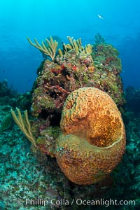 Sponges on Caribbean coral reef, Grand Cayman Island