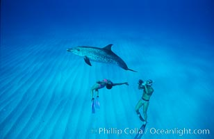 Atlantic spotted dolphin, swimmer Mikako Kotani, videographer Harrison Stubbs. Bahamas, Stenella frontalis, natural history stock photograph, photo id 02021
