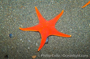 Unidentified starfish