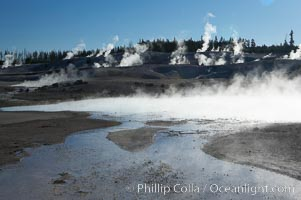 Steam rises in the Porcelain Basin. Norris Geyser Basin, Yellowstone National Park, Wyoming, USA, natural history stock photograph, photo id 13489