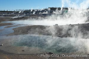 Steam rises in the Porcelain Basin. Norris Geyser Basin, Yellowstone National Park, Wyoming, USA, natural history stock photograph, photo id 13490