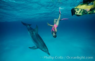 Atlantic spotted dolphin, Olympic swimmer Mikako Kotani, videographer Tom Fitz, Stenella frontalis