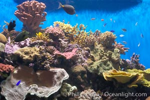 A tropical reef fish tank in the Stephen Birch Aquarium at the Scripps Institution of Oceanography.  Built in 1992, the Birch Aquarium has over 60 tanks including a 70000 gallon kelp forest tank and 13000 gallon shark exhibit, La Jolla, California