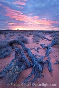Sunrise over the South Coyote Buttes, Paria Canyon-Vermilion Cliffs Wilderness, Arizona