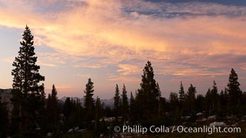 Sunset clouds and trees, Vogelsang High Sierra Camp, summer in Yosemite's high country. Yosemite National Park, California, USA, natural history stock photograph, photo id 23207