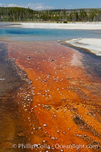 Colorful bacteria mats mark the runoff from Sunset Lake, Black Sand Basin, Yellowstone National Park, Wyoming