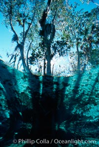 Three Sisters Springs. Three Sisters Springs, Crystal River, Florida, USA, natural history stock photograph, photo id 02672