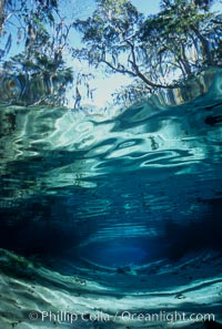 Three Sisters Springs depicted in an underwater landscape with sand, clear water and trees, Crystal River, Florida