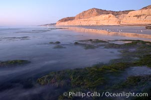 Eel grass sways in an incoming tide, with the sandstone cliffs of Torrey Pines State Reserve in the distance, San Diego, California