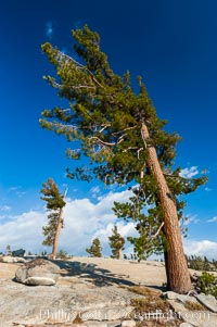 Trees cling to the granite surroundings of Olmsted Point, Yosemite National Park, California