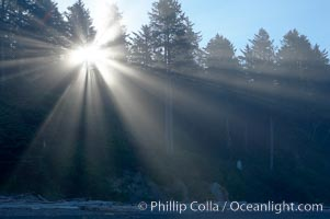 Trees, morning light and mist, Ruby Beach, Olympic National Park, Washington