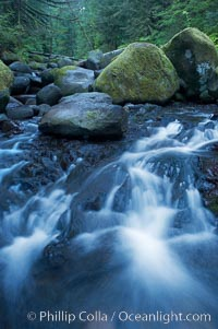 Cascades flow through a lush green temperate rainforest near Triple Falls, Oneonta Gorge, Columbia River Gorge National Scenic Area, Oregon