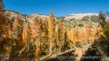 Aspens show fall colors in Mineral King Valley, part of Sequoia National Park in the southern Sierra Nevada, California. Mineral King, Sequoia National Park, California, USA, natural history stock photograph, photo id 32267