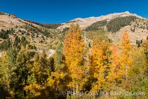Aspens show fall colors in Mineral King Valley, part of Sequoia National Park in the southern Sierra Nevada, California. Mineral King, Sequoia National Park, California, USA, natural history stock photograph, photo id 32269