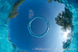Underwater bubble ring a stable toroidal pocket of air bubble ring