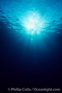 Sunlight filters through the ocean surface and penetrates to the depths below