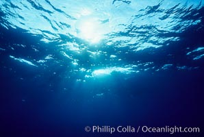 The ocean surface, seen from underwater, ripples with waves and wind and bright sunlight