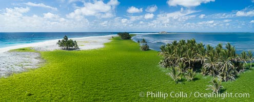 Vegetation and coconut palms at Clipperton Island, aerial photo. Clipperton Island is a spectacular coral atoll in the eastern Pacific. By permit HC / 1485 / CAB (France). Clipperton Island, France, natural history stock photograph, photo id 32857