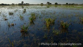 Vernal pool, full of water following spring rains, Santa Rosa Plateau, Santa Rosa Plateau Ecological Reserve, Murrieta, California