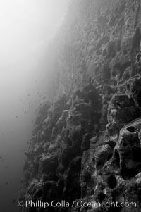 Vertical volcanic wall, Gordon Rocks
