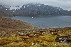 "View of Godthul, from the grassy slopes of South Georgia.  The name Godthul, or ""Good Hollow"", dates back to Norwegian whalers who used this bay as a anchorage"