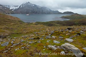 "View of Godthul, from the grassy slopes of South Georgia.  The name Godthul, or ""Good Hollow"", dates back to Norwegian whalers who used this bay as a anchorage. Godthul, South Georgia Island, natural history stock photograph, photo id 24745"