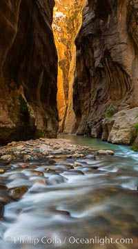 The Virgin River Narrows, where the Virgin River has carved deep, narrow canyons through the Zion National Park sandstone, creating one of the finest hikes in the world. Virgin River Narrows, Zion National Park, Utah, USA, natural history stock photograph, photo id 28583