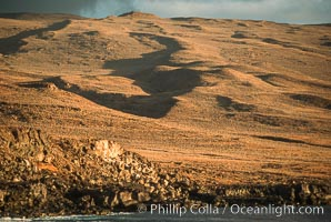 Volcanic cones, landscape, south end of Isla Guadalupe, Guadalupe Island (Isla Guadalupe)