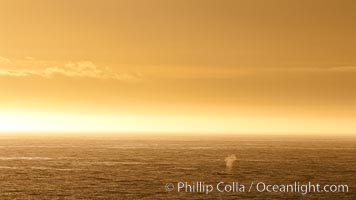 Whale blow at sunrise, near Deception Island
