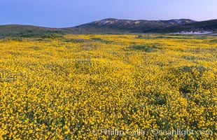 Wildflowers bloom across Carrizo Plains National Monument, during the 2017 Superbloom. Carrizo Plain National Monument, California, USA, natural history stock photograph, photo id 33226
